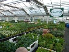 Kräutervielfalt bei Gartenbau Rülcker.