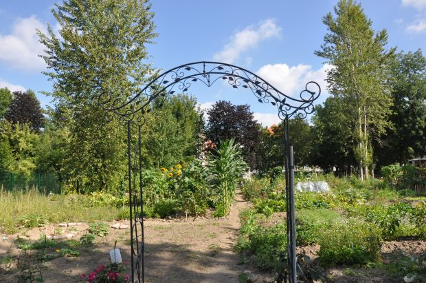 Die Internationalen Gärten in der Dresdner Johannstadt am neuen Standort. Foto: Una Giesecke