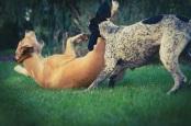 Hundebesitzer freuen sich auf viele Neuigkeiten am kommenden Wochenende. Foto: privat