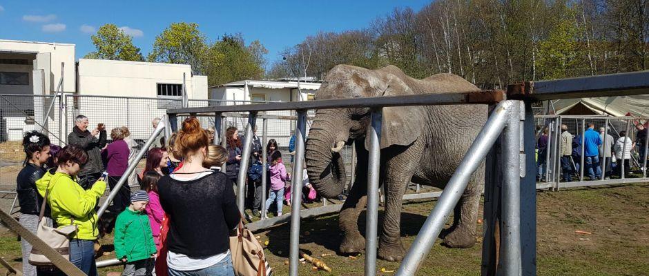 Beim Circus Voyage kann man sich selbst von der artgerechten Tierhaltung überzeugen. Foto: PR